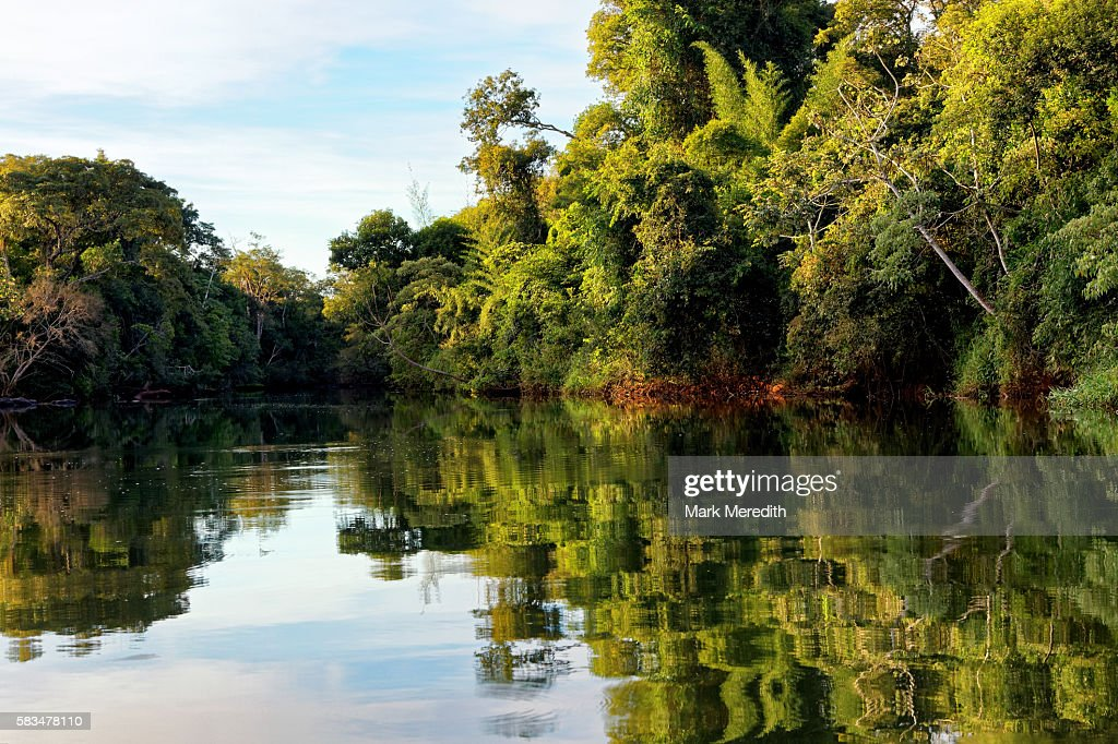 Iguana River with reflections : Stock Photo