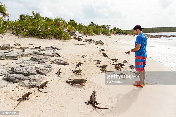 Iguanas on the beach - Bahamas