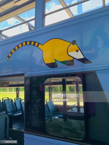 """iguazu falls (cataratas do iguaçu, brazil) bus transportation coati animal design closeup - """"markus daniel"""" - fotografias e filmes do acervo"""
