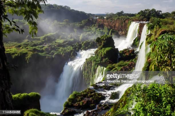 iguazu falls - regenwald stock-fotos und bilder