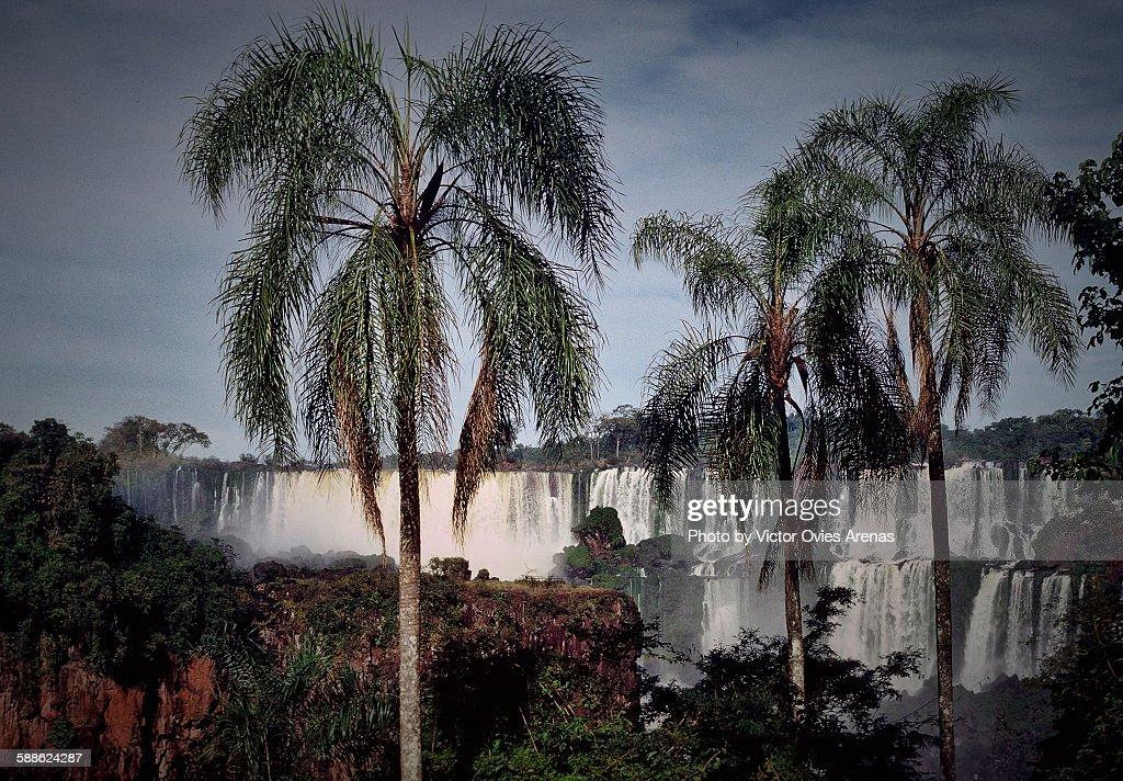 Iguazu Falls : Stock Photo
