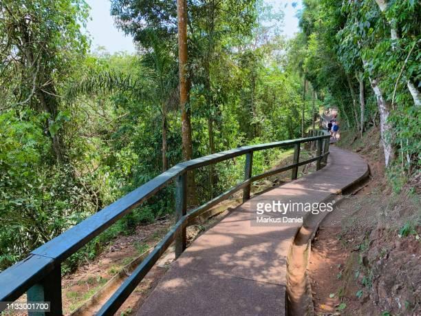"iguazu falls (cataratas do iguaçu, brazil) walkway - ""markus daniel"" photos et images de collection"