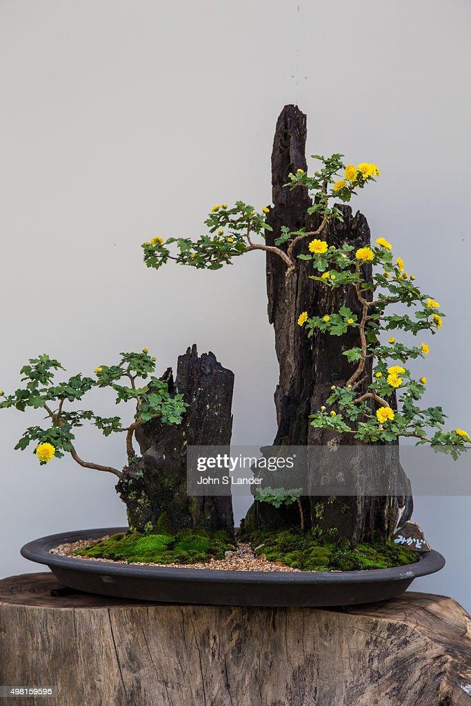 Ikebana Meaning Arranged Flower Is The Japanese Art Of Arrangement Also