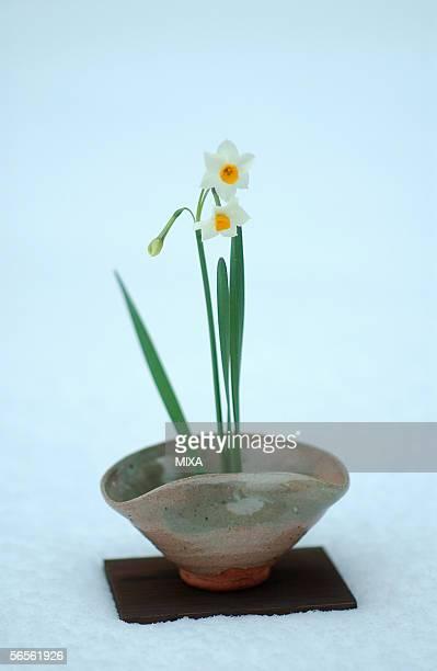 Ikebana of daffodils