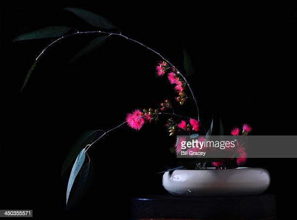 Ikebana With Eucalyptus Blossoms