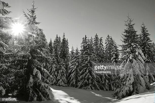 il fascino del bosco d'inverno - inverno stock pictures, royalty-free photos & images