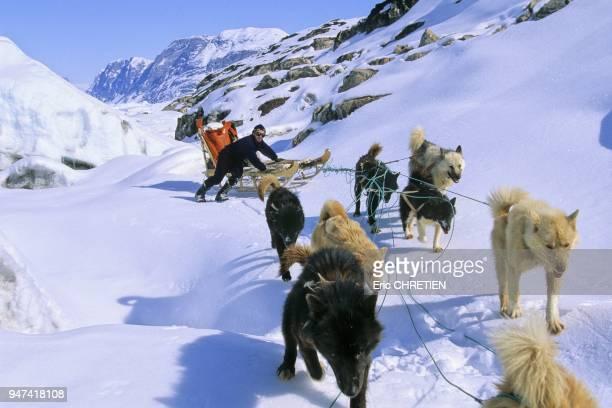 Il faut souvent aider les chiens et descendre du traineau comme ici sur ce terrain tres chaotique tout au nord du fjord Sermilik Durant le long hiver...