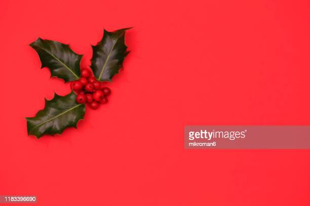 ilex, or holly evergreen shrubs - twig stock pictures, royalty-free photos & images