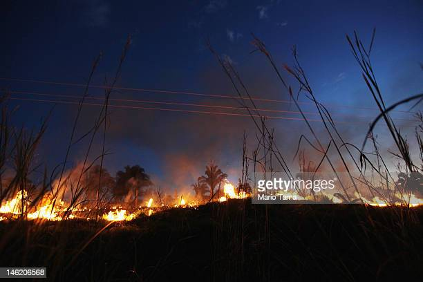 Illegal burning clears brush and small trees in order to clear land for agriculture in an already deforested section of Amazon rainforest on June 11...