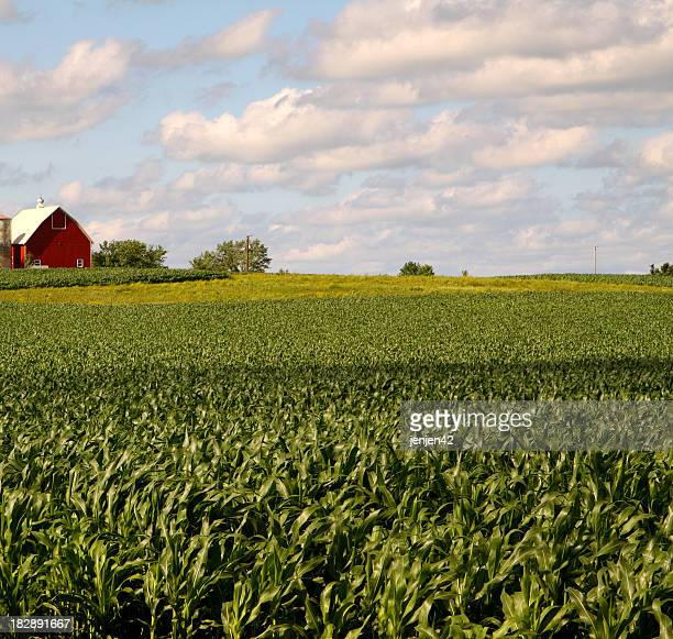 Illinois campo de Milho