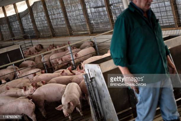 Illinois farmer Brian Duncan walks through a hog pen on his farm January 25 in Polo Illinois America is in flux Once stable jobs have become...