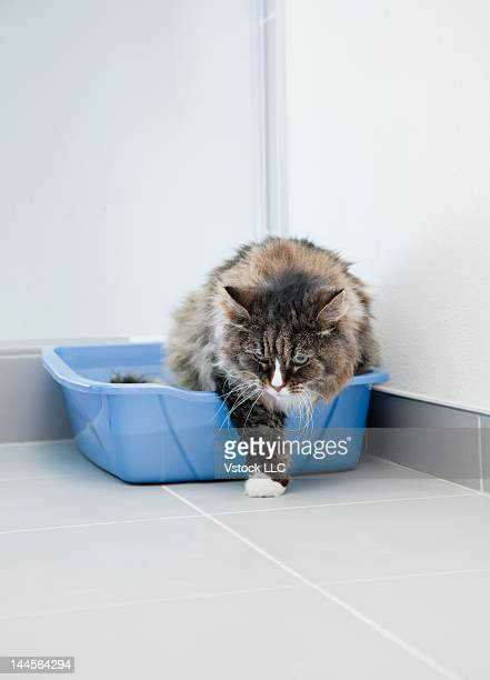 usa, illinois, metamora, cat at litter box - litter box stock photos and pictures