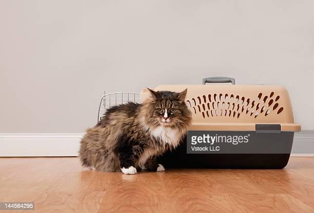 USA, Illinois, Metamora, Cat sitting next to cage