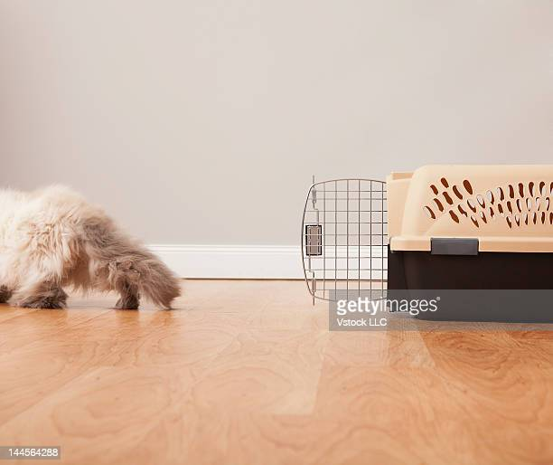 USA, Illinois, Metamora, Cat walking away from cage