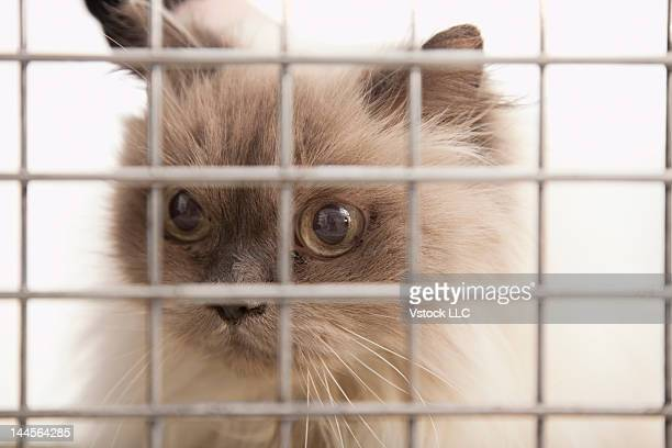USA, Illinois, Metamora, Close-up of kitten in cage
