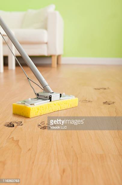 USA, Illinois, Metamora, Close-up of mop cleaning floor with dog's footprints
