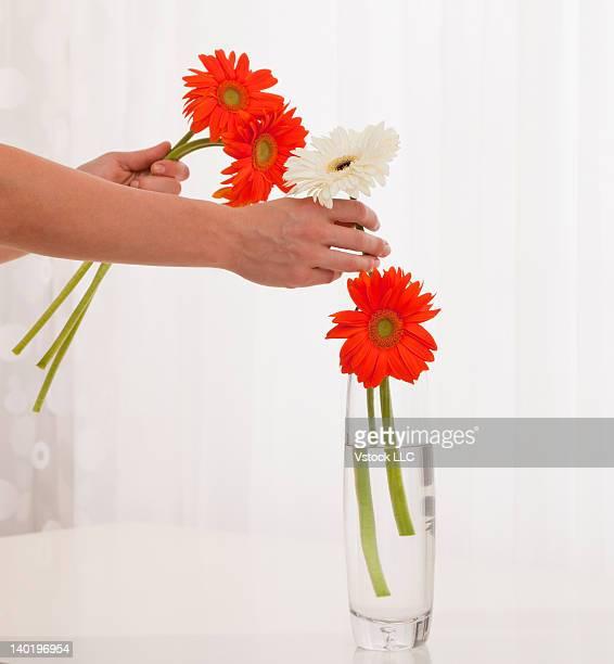 USA, Illinois, Metamora, Close-up of woman putting flowers into vase