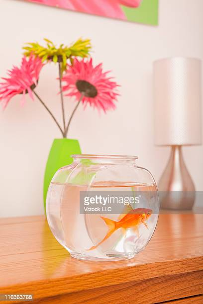 USA, Illinois, Metamora, Goldfish in fishbowl on shelf