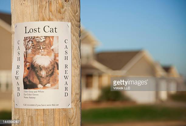 usa, illinois, metamora, lost cat poster on telephone pole - flyer leaflet stock photos and pictures