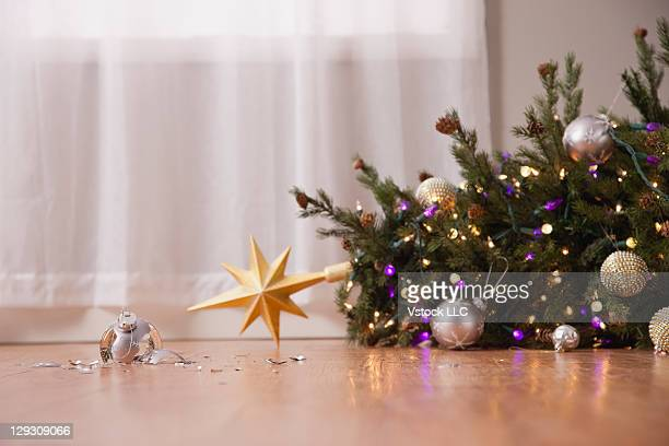 USA, Illinois, Metamora,Fallen christmas tree