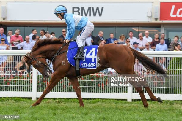 Illumicon ridden by Luke Currie head to the barrier before the Hyland Race Colours Autumn Stakes at Caulfield Racecourse on February 10 2018 in...