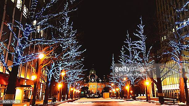 illuminated bare trees in city during christmas - christmas scenes stock photos and pictures