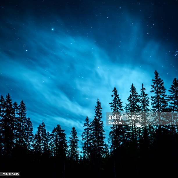 Illuminated by the moon - Forest in Norway