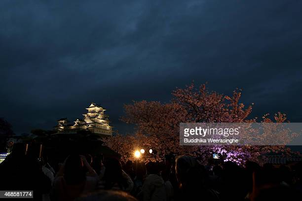 Illuminated cherry blossoms in full bloom and Himeji Castle main tower are seen during the Himeji Castle Cherry Blossoms Festival on April 4 2015 in...