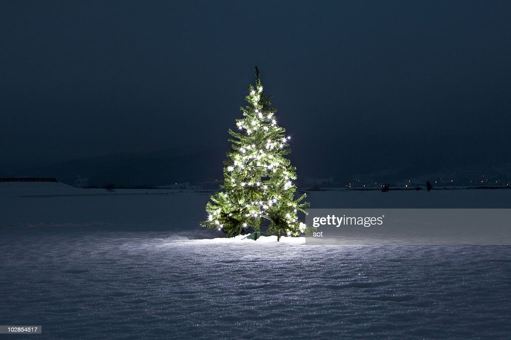 Christmas Tree Stock Photos And Pictures
