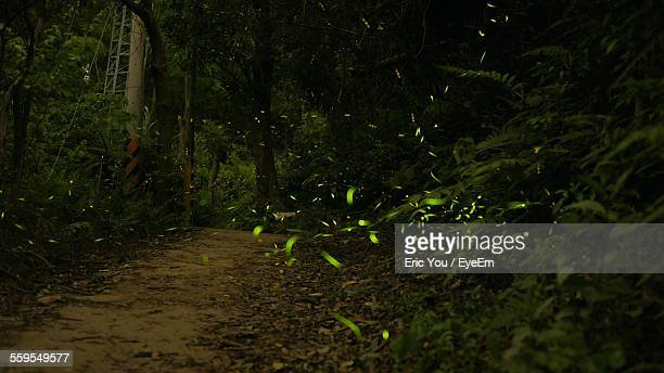 Illuminated Fireflies Flying On Dirt Road In Woodland