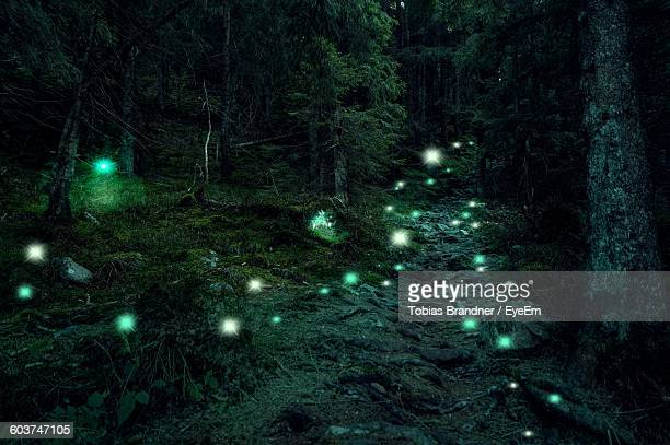 illuminated fireflies in forest - fireflies stock pictures, royalty-free photos & images
