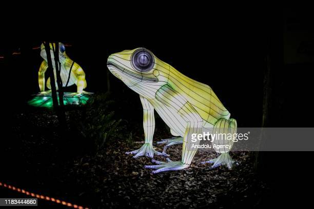 Illuminated frogs are displayed at Colombia Shines festival at the Bogota's Botanical Garden in Bogota on November 19 2019 Festival hosts more than...