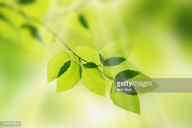 Illuminated green leaves