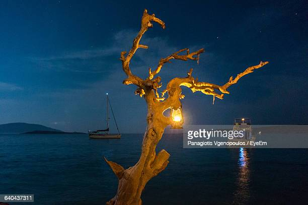 illuminated lantern on dead tree against sky at night - vgenopoulos stock pictures, royalty-free photos & images