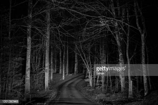 illuminated narrow road through beech forest at night - floodlit stock pictures, royalty-free photos & images