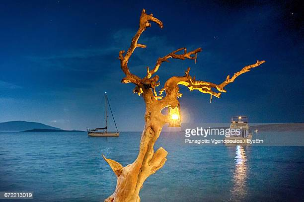 illuminated oil lamp hanging on bare tree at riverbank - vgenopoulos stock pictures, royalty-free photos & images