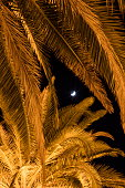 illuminated palm trees moon sicle at