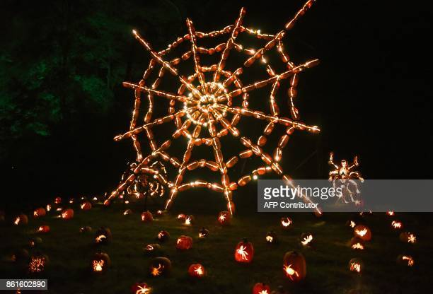 Illuminated pumpkins in the shape of the web are on display during the Great Jack O'Lantern Blaze at Van Cortlandt Manor in CrotononHudson New York...