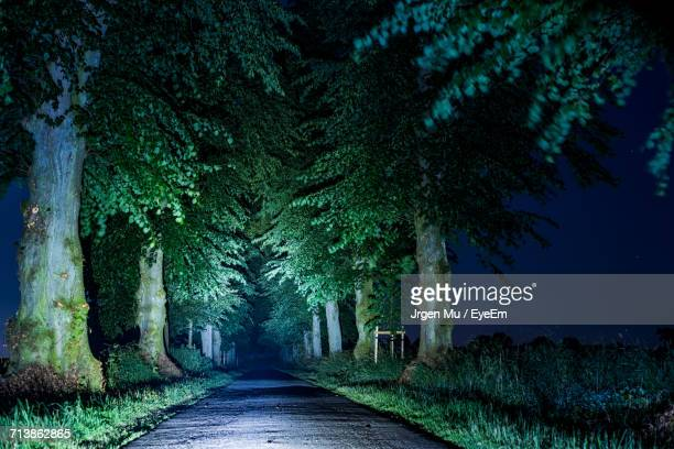Illuminated Road Amidst Trees At Night
