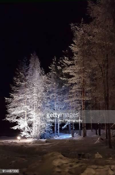 Illuminated Snow Trees (Finland)