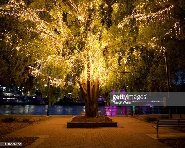 illuminated tree on brisbane river waterfront - holy city park stock pictures, royalty-free photos & images