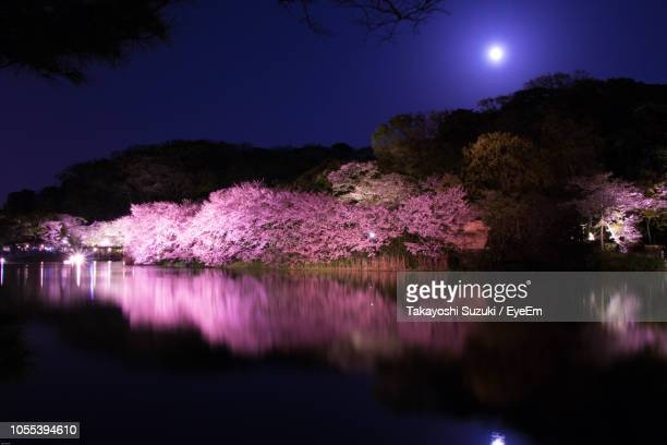 illuminated trees by lake against sky at night - pink moon stock pictures, royalty-free photos & images