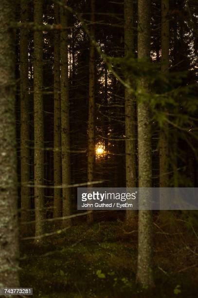 Illuminated Trees In Forest At Night