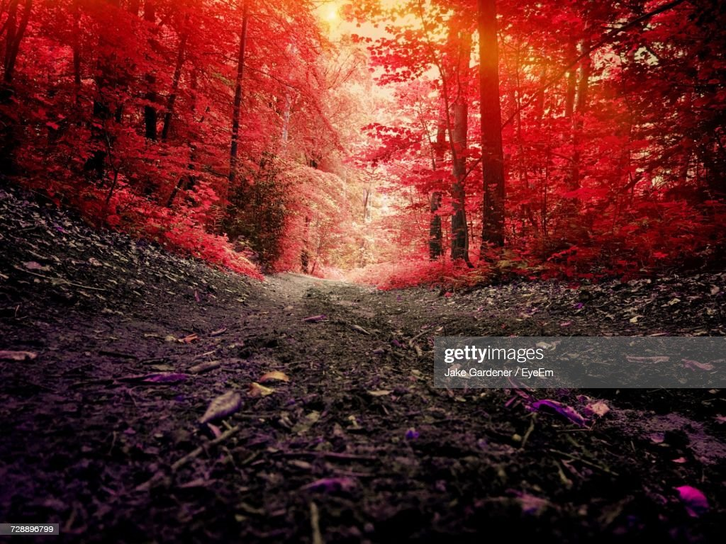 Illuminated Trees In Forest During Autumn : Stock Photo