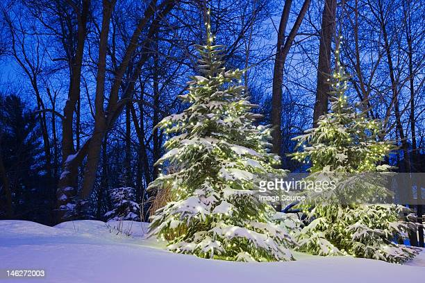 Illuminated trees in snow