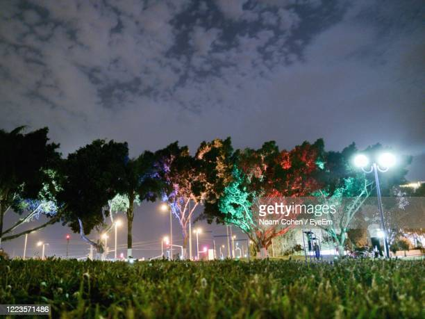 illuminated trees on field against sky at night - noam cohen stock pictures, royalty-free photos & images