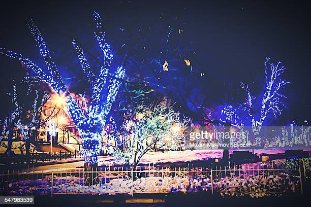 Illuminated Trees On Snow Covered Field Against Sky At Night During Christmas