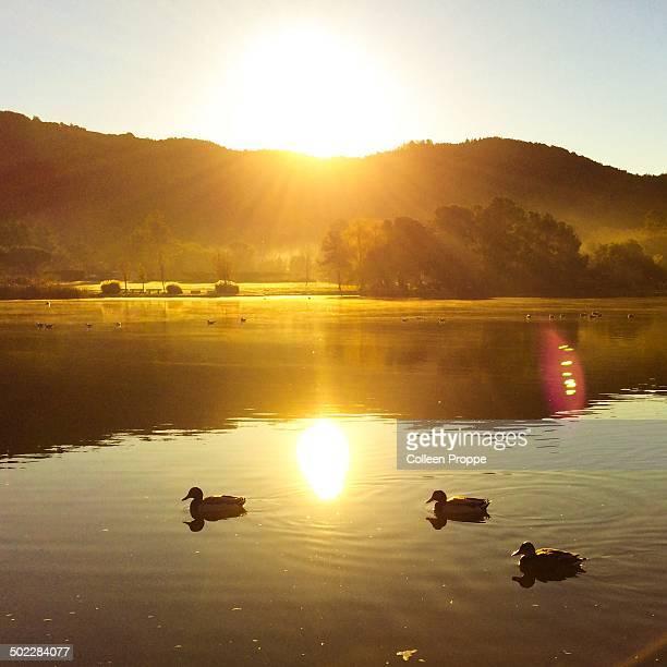 Illuminating sunbeams on a duck pond