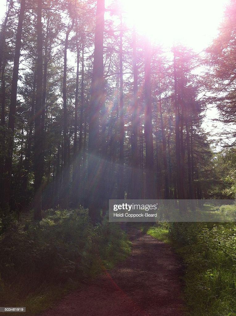 Illuminating Sunbeams : Stock Photo
