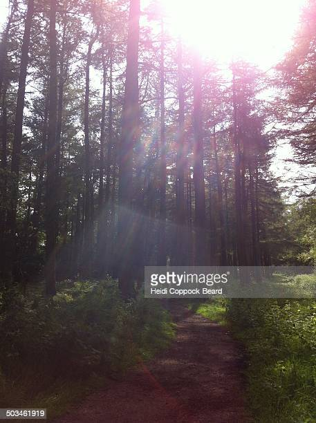 illuminating sunbeams - heidi coppock beard photos et images de collection